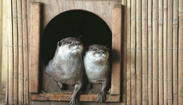 otters blue reef