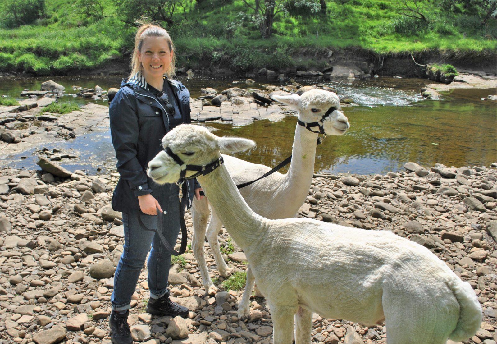 teesdale alpacas